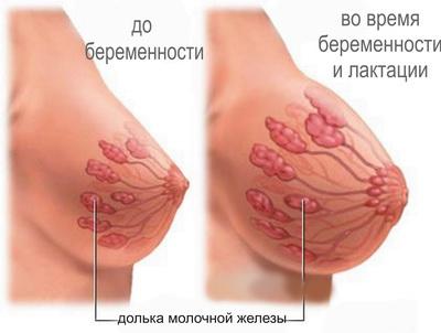 Женская Грудь После Родов Фото
